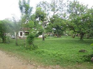 Vista de Terreno de Casa El Pino
